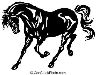 black horse - running black horse
