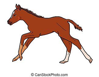 foal - Running brown foal on a white background.