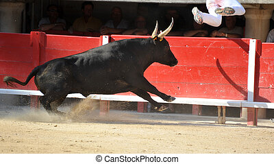 running bull - Furious bull in the bullfight arena running...