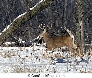 Running Deer - A large deer running in the winter