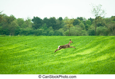 Running deer - Deer running across a field in daytime