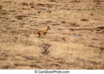 running deer in the field - motion blur