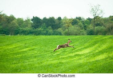 Running deer - Deer running across a field in daytime