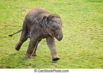 Running elephant calf in the zoo