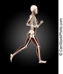 Running female medical skeleton