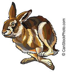 running hare - running hare,lepus europaeus,illustration...