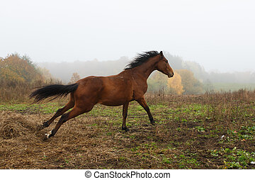 Running horse in the fog