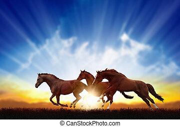 Running horses - Peaceful background - running horses,...