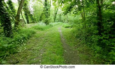 running in forest - fast run in forest footpath, steadicam ...