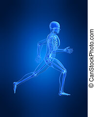 running man anatomy - 3d rendered illustration of a running...