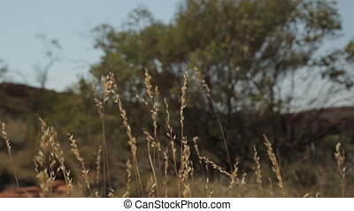 Running near long grass path, Outback, NT - Medium low-angle...
