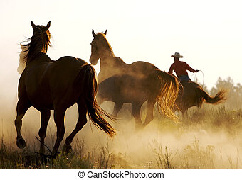 Running Wild - horse running in the desert with cowboy...