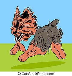 Running Yorkie Dog