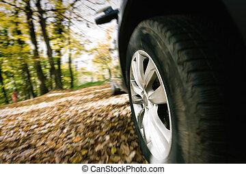 ruota, vista primo piano, foresta, car's