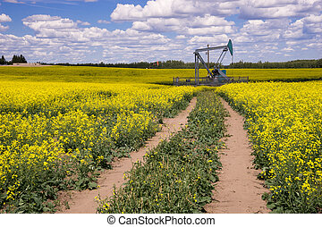 Rural Alberta - Oil Pumpjack in the middle of blooming canola field