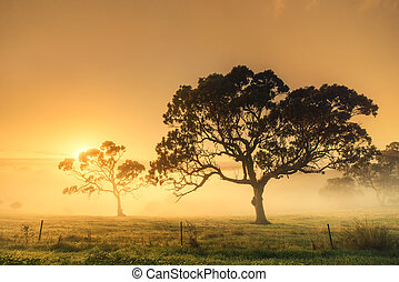 rural, amanhecer