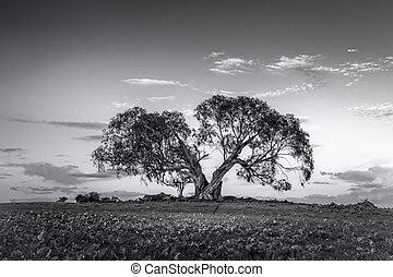 rural, arbre, fente, nsw