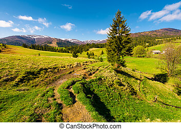 rural are in Carpathian mountains in springtime. lovely...