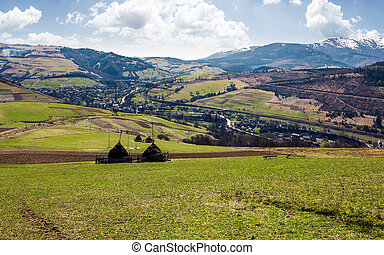 rural area in Carpathian mountains. haystacks on grassy...