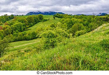 rural area in Carpathian valley - rural area in the...