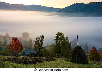 rural area on foggy autumn morning. gorgeous countryside...