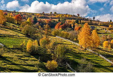 rural area on hillside in autumn. spectacular countryside...