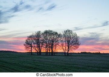 rural, arte, paisagem