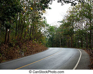 Rural asphalt road in the forest