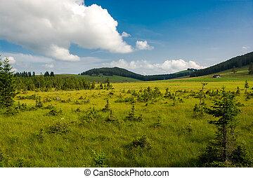 rural, austri, styria, paisagem