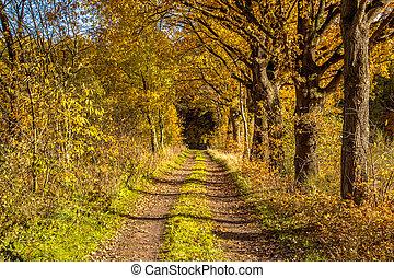 Rural autumn lane