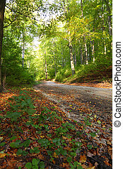 Rural autumn scenery - Fall in forest - park road