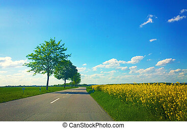 rural Bavaria,country road and yellow canola fields -...