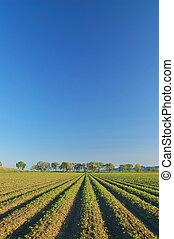 rural, campo