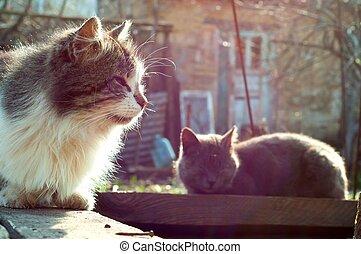Rural Cats