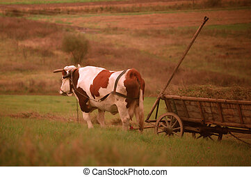 rural concept - domestic animal rural life people