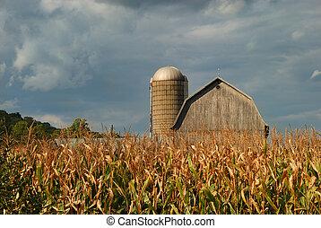 Rural Cornfield