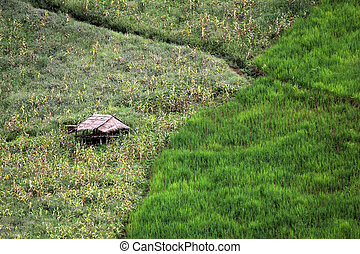 rural cottage in paddy field