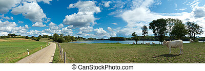 rural countryside landscape with lake, country road and cows