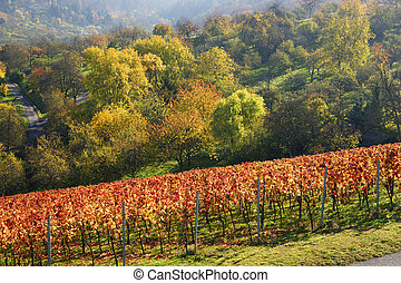 Rural countryside with vineyard in fall