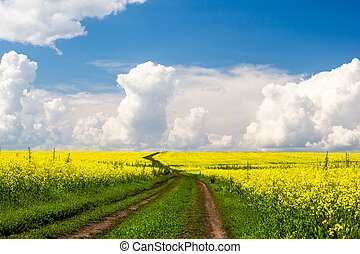 Rural dirt road under blue sky with clouds