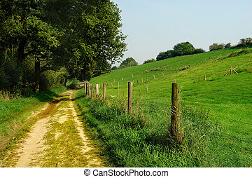 Sandy dirt track between the edge of a forest and hilly rolling grassland, fenced by barbed wire. Trees and meadows.