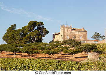 rural estate with an olive grove in Spain