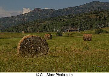 rural, -, fardos de heno, en, un, campo