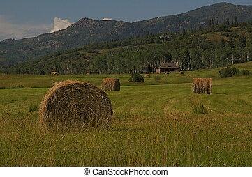 rural, -, fardos feno, em, um, campo