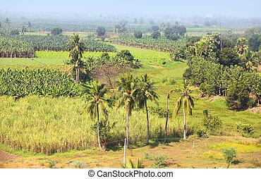 Rural farm lands in Andhra pradesh India