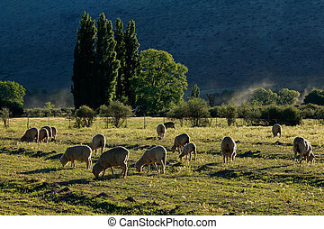 Rural farm landscape - South Africa