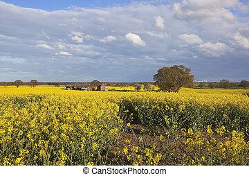 rural farm with canola fields in flower