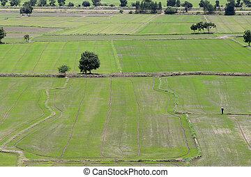 Rural farmland to grow rice.