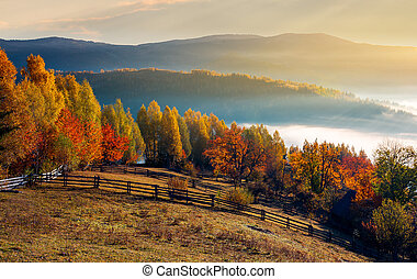 rural field and orchard in autumn at sunrise. mountainous...