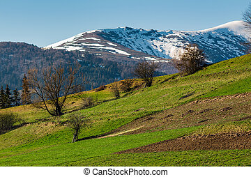 rural field on grassy slope under the blue sky. mountain...